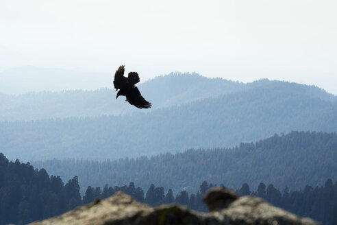 USA, California, Eagle flying over Yosimite National Park - NGF000245
