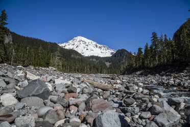 USA, Washington, Seattle, Mount Rainier National Park - NGF000256