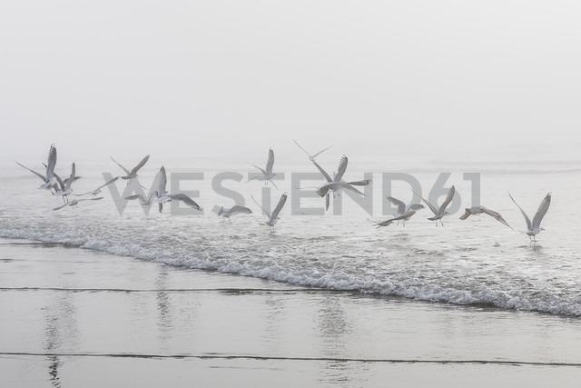 USA, Washington, Seattle, Long Beach, flying birds on beach - NGF000259