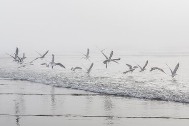 USA, Washington, Seattle, Long Beach, flying birds on beach - NGF000259