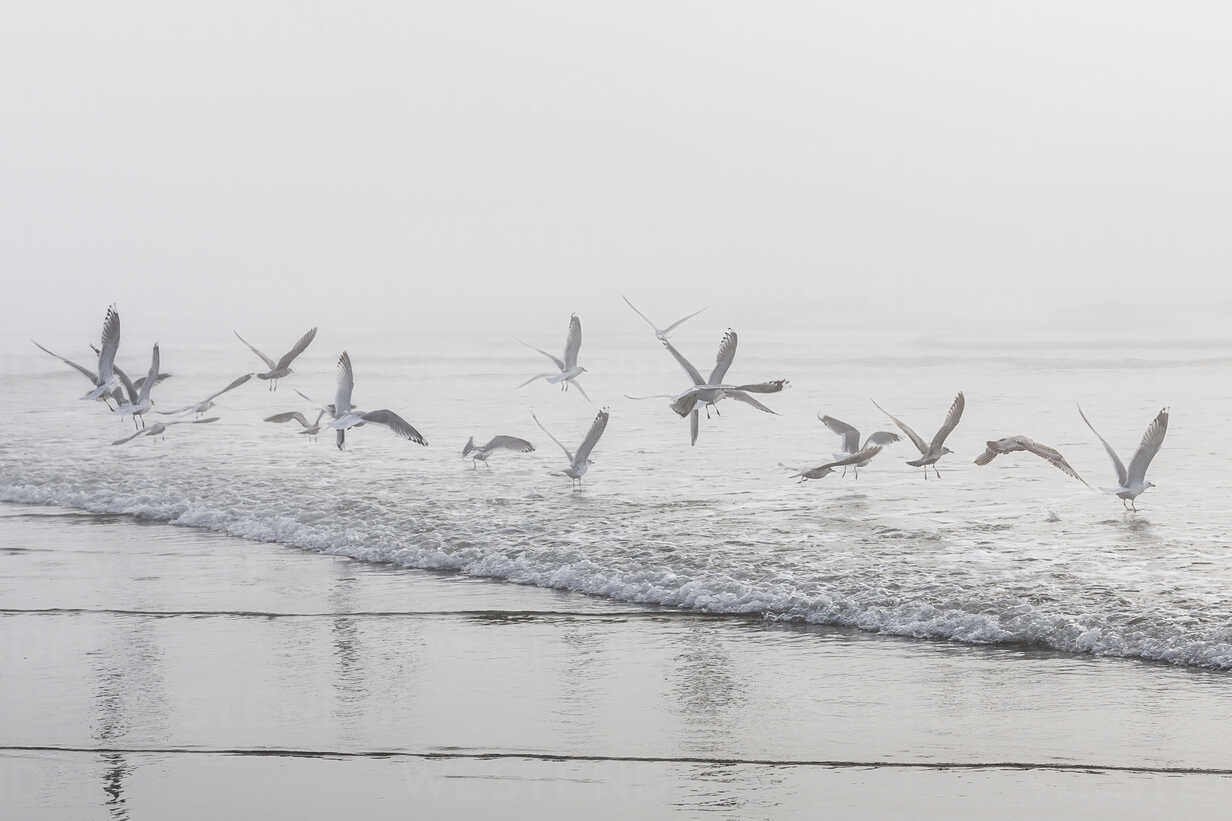 USA, Washington, Seattle, Long Beach, flying birds on beach - NGF000259 - Nadine Ginzel/Westend61