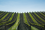USA, California, view to vineyard - NGF000268