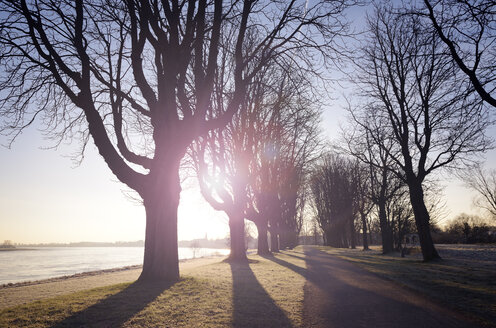 Germany, Neuss, treelined path at morning backlight in winter - GUFF000269