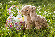 Easter bunny and bag of Easter eggs on a meadow - SARF002531