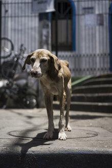 Brazil, Rio de Janeiro, portrait of scrawny dog at a favela - MAUF000244