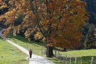 Hiker in front of beech tree - LBF001371