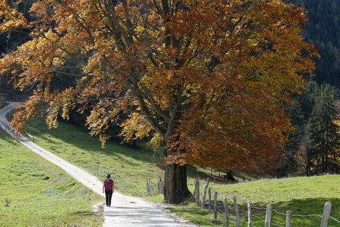 Hiker in front of beech tree - LBF001371