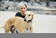 Spain, Llanes, portrait of greyhound on the beach with owner in the background - MGOF001367