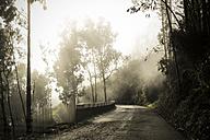 Portugal, Madeira, road through laurel forest in fog - REAF000046