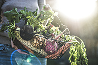 Woman's hands holding wire basket with root vegetables - DEGF000619
