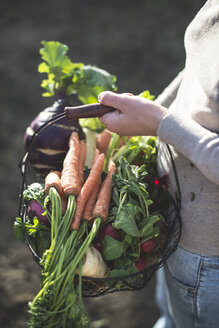 Partial view of woman holding wire basket with root vegetables - DEGF000625