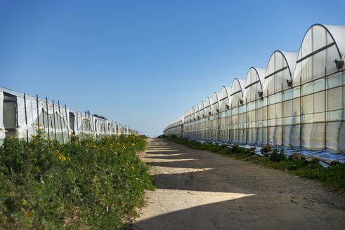 Italy, Ragusa, Santa Croce Camerina, row of greenhouses - CSTF000920