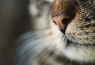 Cat nose, close-up - RAEF000884