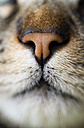 Cat nose, close-up - RAEF000887