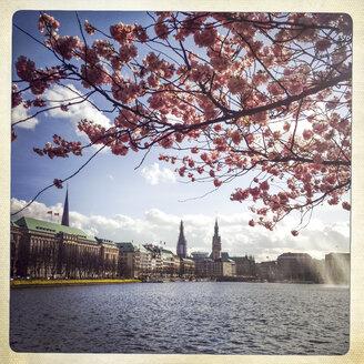 Germany, Hamburg, Cherry blossom at Binnenalster - EGBF000128