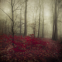 Germany, red autumn leaves in winter forest - DWIF000695