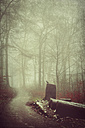 Germany, forest track in fog - DWIF000704