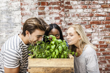 Friends smelling at herbs - FMKF002315