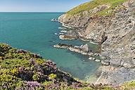 UK, Wales, Dinas Head peninsula at Pembrokeshire Coast National Park near Newport - SHF001881