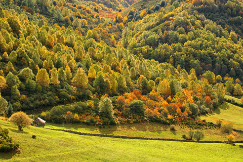 Spain, Asturias, autumnal trees at Natural Park of Fuentes del Narcea, Degana and Ibias - DSGF000939
