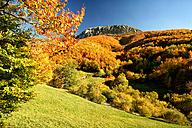 Spain, Asturias, Natural Park of Fuentes del Narcea, Degana and Ibias in autumn - DSGF000945