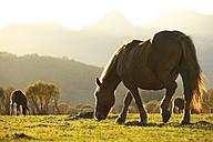 Spain, Asturias, grazings horses at Natural Park of Fuentes del Narcea, Degana and Ibias - DSGF000948