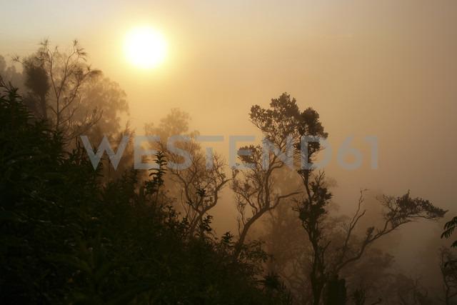 Indonesia, Java, Silhouette of trees at Bromo Tengger Semeru National Park - DSGF001003