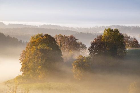 Germany, Bavaria, Pfaffenwinkel, Aidling, Aidlinger Hoehe, morning fog in the morning - SIEF006972