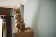 Portrait of starring tabby cat sitting on top of cabinet at home - RAEF000909