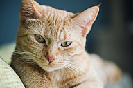Portrait of tabby cat - RAEF000912