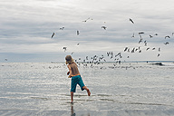 France, Brittany, Finistere, Pointe de la Torche, boy on the beach chasing seagulls - MJF001781