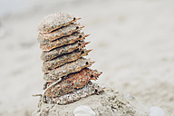 France, Brittany, stack of spider crabs on beach - MJF001796