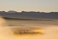Germany, Bavaria, Upper Bavaria, Isarauen, Pupplinger Au and fog at sunrise - SIEF006978