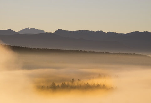 Germany, Bavaria, Upper Bavaria, Isarauen, Pupplinger Au and fog at sunrise - SIEF006978