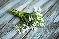 Bunch of snowdrops on wood - MAEF011359