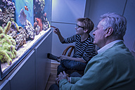 Grandfather with grandson looking at aquarium - PAF001550