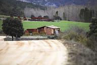 Spain, Cuenca, wicker harvest in Canamares in autumn - DSGF001013