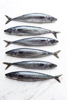 Row of six sardines on white marble - VABF000280
