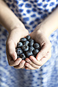 Hands of girl holding blueberries - SARF002616