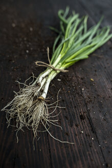 Bunch of spring onions and soil on dark wood - DEGF000667