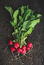 Red radishs and soil on dark wood - DEGF000670