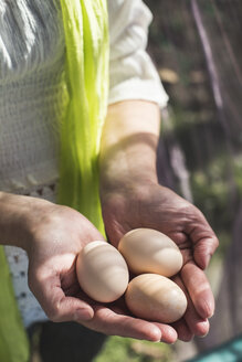 Woman's hands holding three brown eggs, close-up - DEGF000688