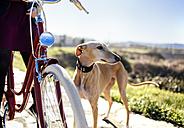 Young woman with bicycle and greyhound - MGOF001490