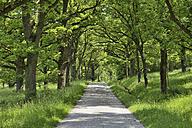 Germany, Bavaria, Franconia, Spessart, with oak trees lined rural road - RUEF001647