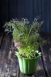 Flowerpot of wild turnip - CSF027282