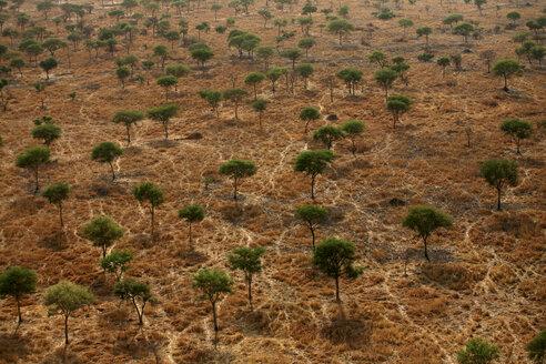 Chad, Zakouma National Park, Aerial view of a forest of acacias in the savannah - DSGF001109