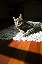 Portrait of tabby cat relaxing on a carpet at home - RAEF000939