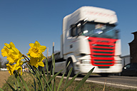 Truck in motion passing daffodils at the roadside - FRF000398