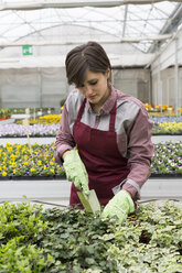 Young female gardener working in greenhouse, hand trowel - ALBF000046