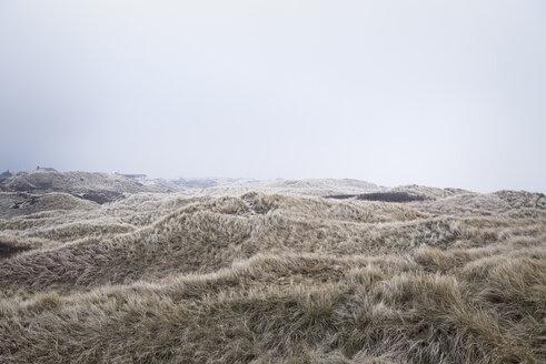 Denmark, Henne Strand, Dune landscape - BMA000157